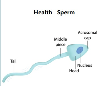 Health-Sperm